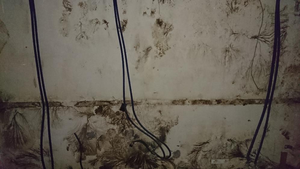 traitement contre les champignons lignivores m rule sur un mur d 39 une villa st jean de luz. Black Bedroom Furniture Sets. Home Design Ideas