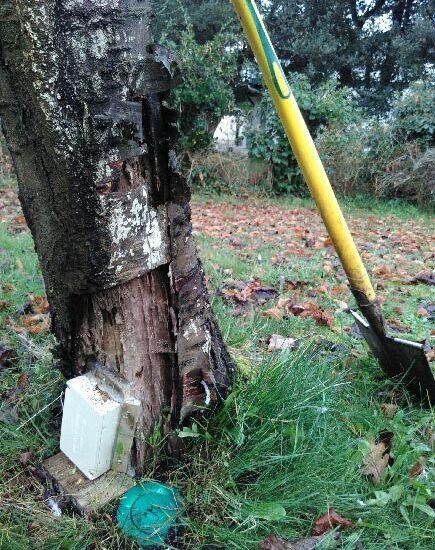 Pièges anti-termites à Capbreton dans les Landes