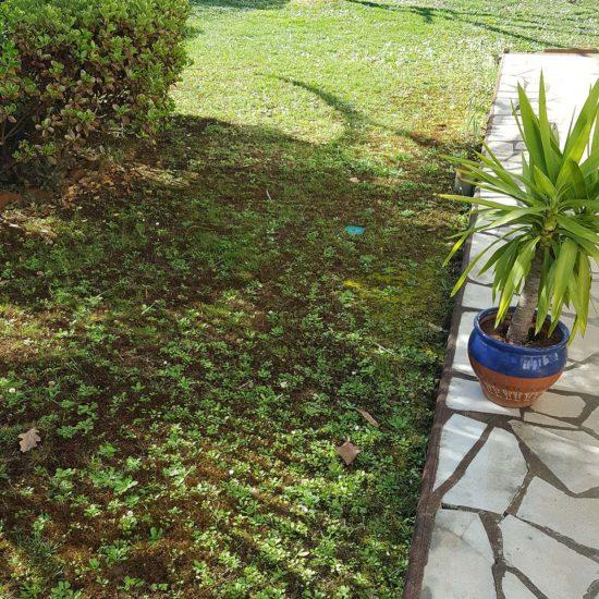 Traitement termites Capbreton dans les Landes