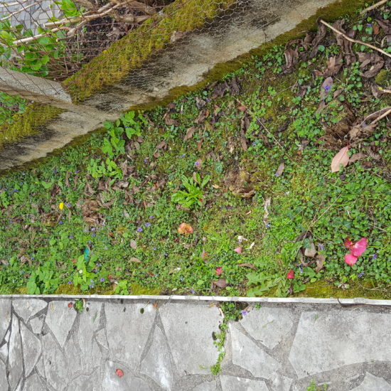 Piège anti-termites à Bayonne
