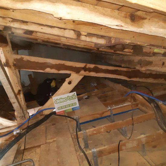 detec-bois, spécialiste du traitement du bois contre les insectes xylophages au pays basque