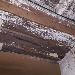 Traitement anti-termites par pièges dans les Landes