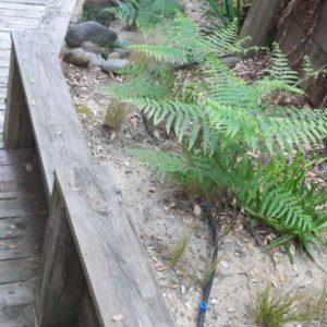 detec-bois société de traitement contre les termites dans les Landes à hossegor