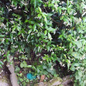 detec bois luute contre les termites à Puyoo dans le Béarn traitement anti-termites par pièges
