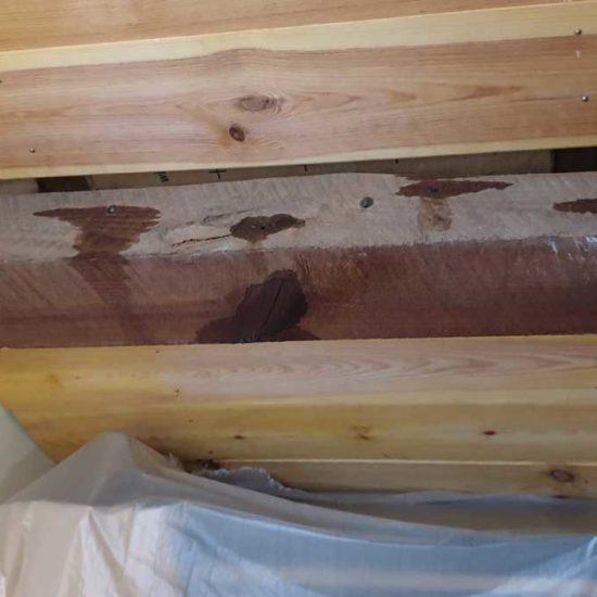 detec-bois traitement des bois de charpente contre les vrillettes et les capricornes à boucau au pays basque