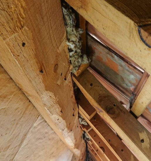 detec bois traitement des bois de charpente contre les vrillettes et les capricornes à labenne dans les landes