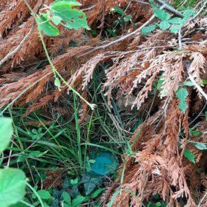 detec bois réalise le traitement anti-termites par pièges à mouguerre au pays basque