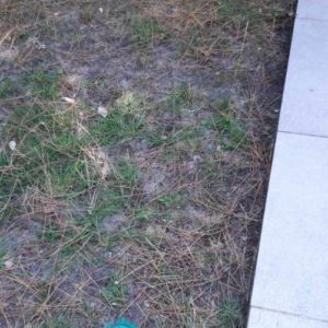 detec bois traitement des termites a capbreton dans les landes