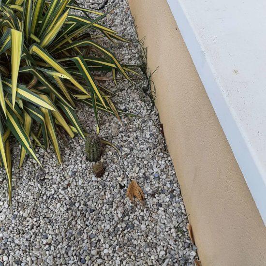 detec-bois lutte contre les termites à Tarnos dans les Landes