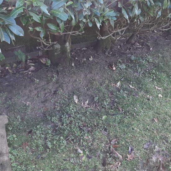 detec bois réalise le traitement des termites à cauneille dans les landes