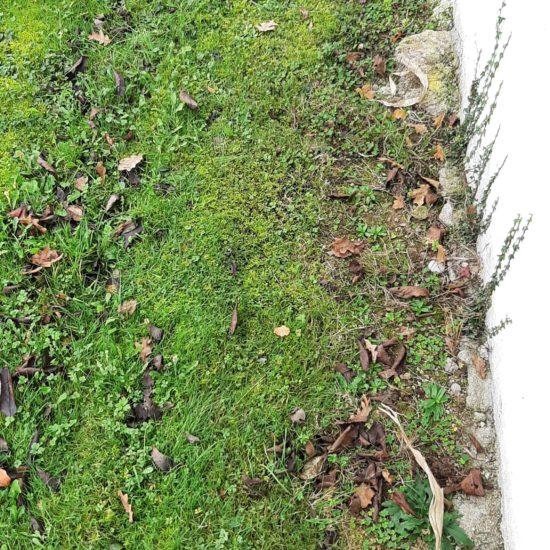 detec-bois réalise le traitement des termites à Halsou au Pays Basque par l'installation de pièges anti-termites sentritech