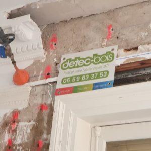 detec-bois réalise le traitement contre les mérules (champignons lignivores) dans une copropriété de Biarritz