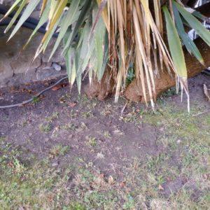 detec-bois traitement termite landes à Hossegor