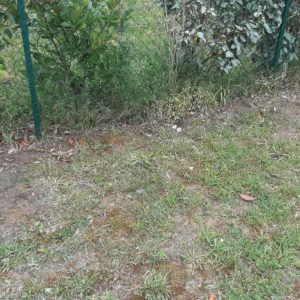 detec-bois traitement des termites dans les Landes