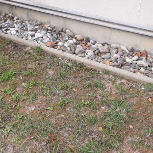 detec bois traitement termites salies de béarn